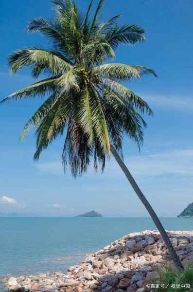 我们的征途中,陆毅、姚笛他们流放探险的奔巴岛有多美